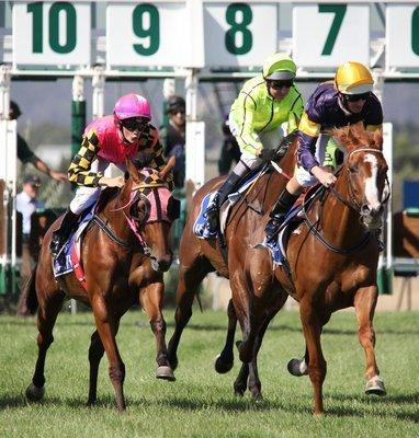 Sponsor Your Horse's Start Gate