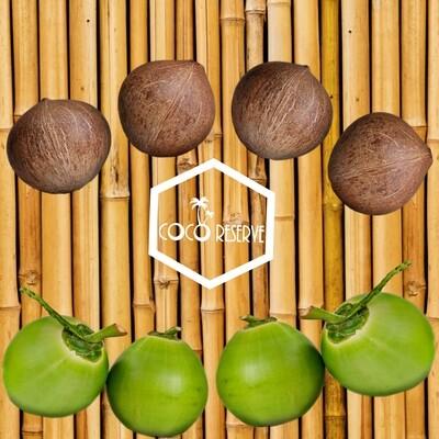 8 - Coco Mixed Variety Box