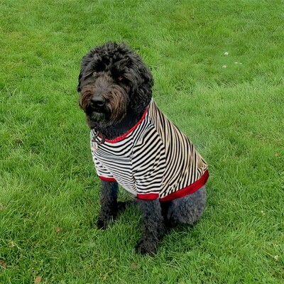 The Salty-Dog T-Shirt
