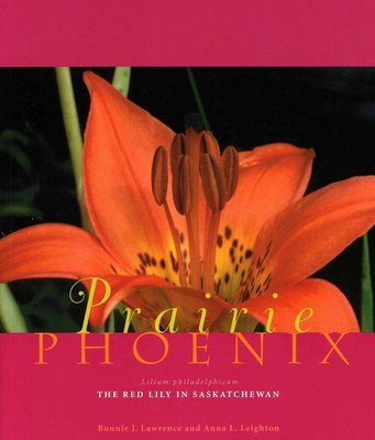 Prairie Phoenix: The Red Lily in Saskatchewan