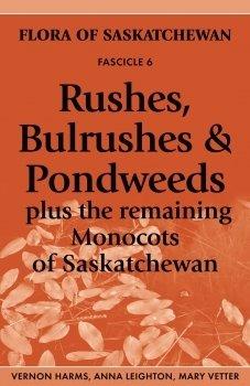 Rushes, Bulrushes & Pondweeds: Plus the Remaining Monocots of Saskatchewan