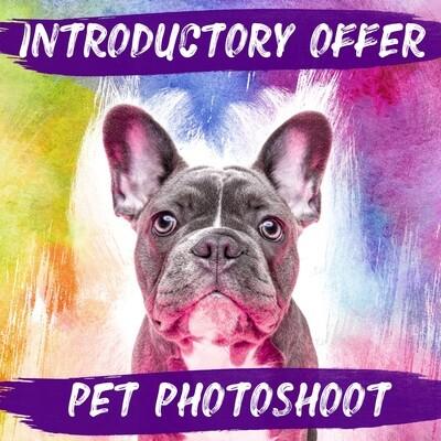 Pet Photoshoot & £50 Gift Voucher