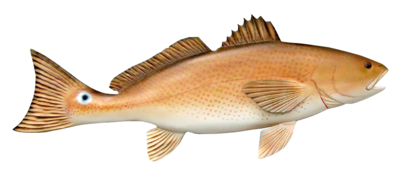 Redfish Sponsorship