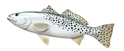 Trout Sponsorship (Does not include Guide)
