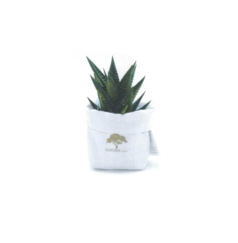 Sacchetto piccolo con pianta Haworthia Pz. 1