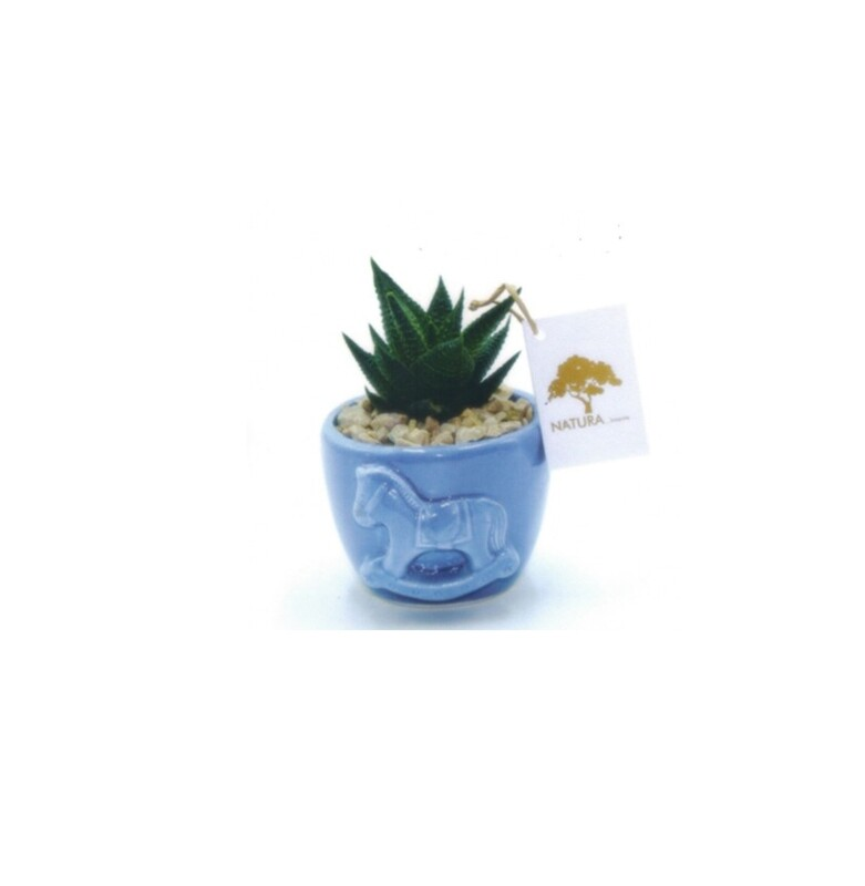 Vaso tondo piccolo con pianta Haworthia Pz. 1