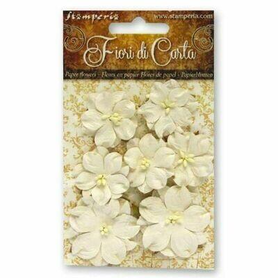 Flores - Blanco