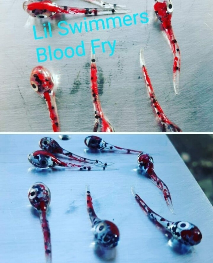 1 1/4 Lil Swimmers  blood fry 10pk