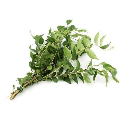 Fresh Curry Leaves Single Pack / කරපිංචා