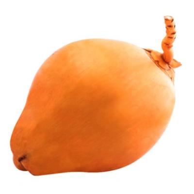 Fresh King Coconut / තැඹිලි