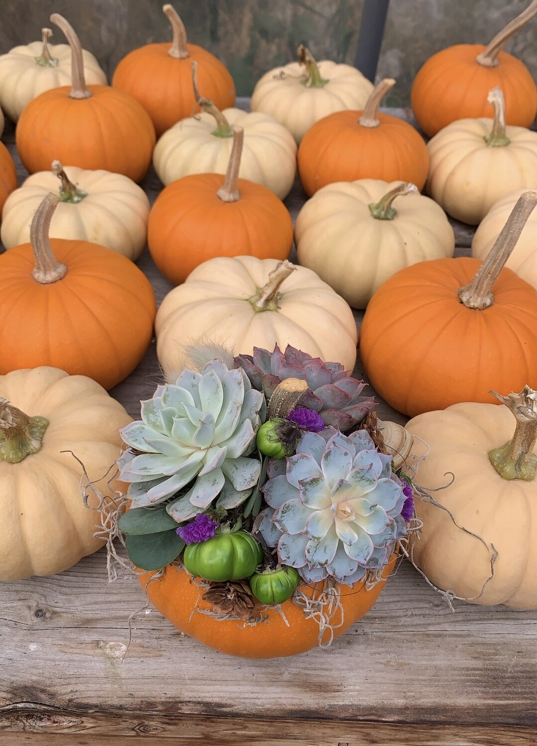 Mini Succulent Pumpkins
