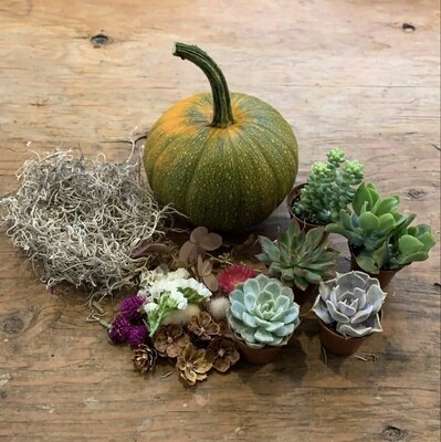 DIY Succulent Pumpkin kit