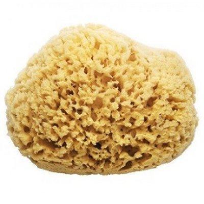 Natural Ocean Sponge