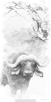 Sketch (Buffalo)