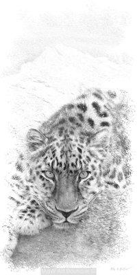 Sketch (Leopard)