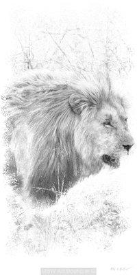 Sketch (Lion)