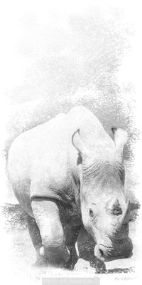Sketch (Rhino)