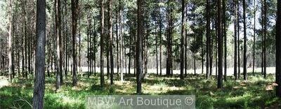 Trees (Pano)