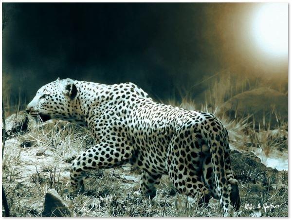 Leopard stalk smooth