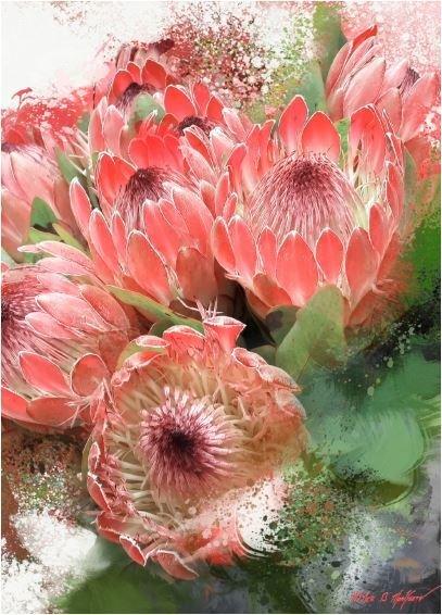 Protea splash (Crop)