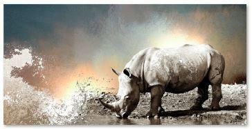 Thirsty rhino - alpha