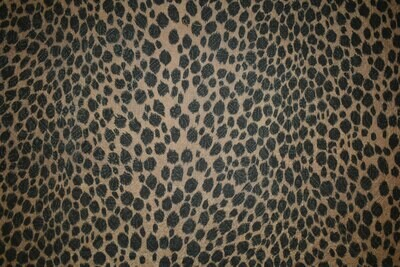 Excited leopard-Brown Shades