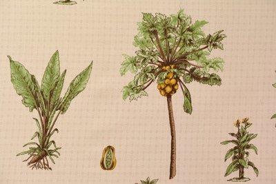 Papaya-Yellow Orange