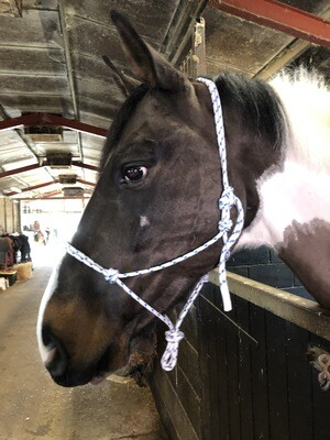 Horsemans Halter Cob size. UK ship Only. contact for international shipping .