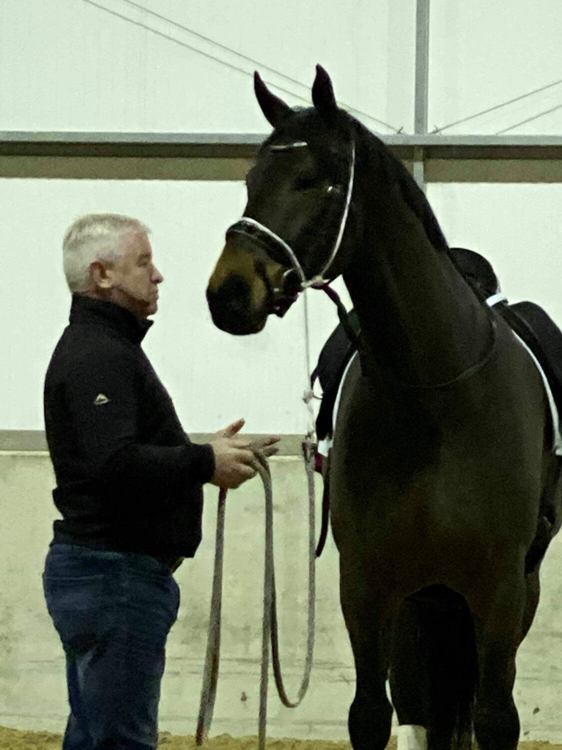 Basic Halter Training - the start to all groundwork  Reduced from £55 during Covd-19 lockdown
