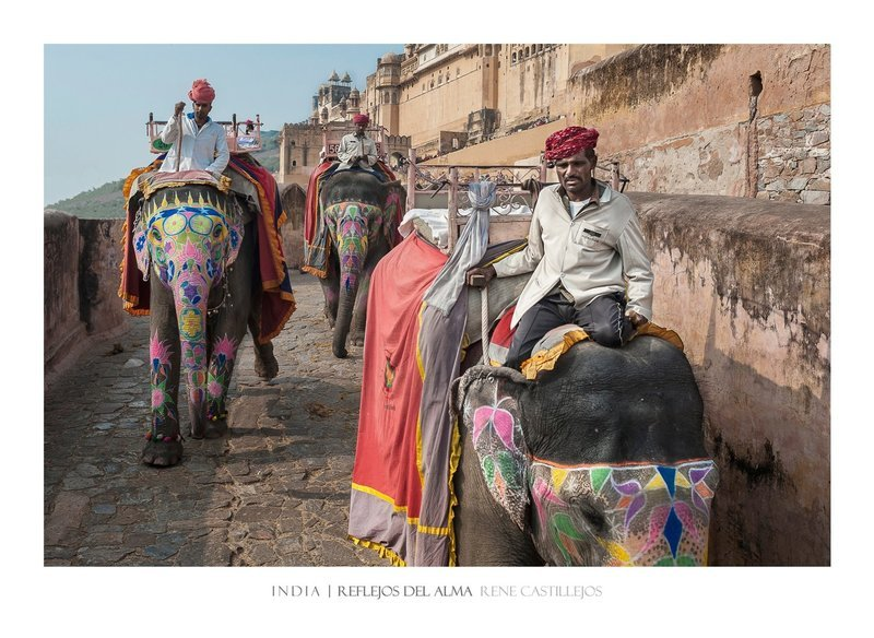 HOLY ELEPHANTS IN AMBER FORT