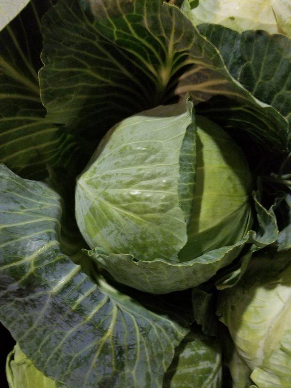 Cabbage  50 lb. Box
