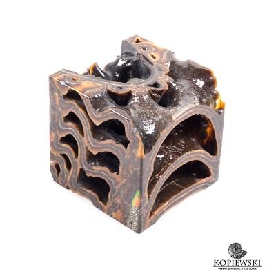 Cube Ammonite