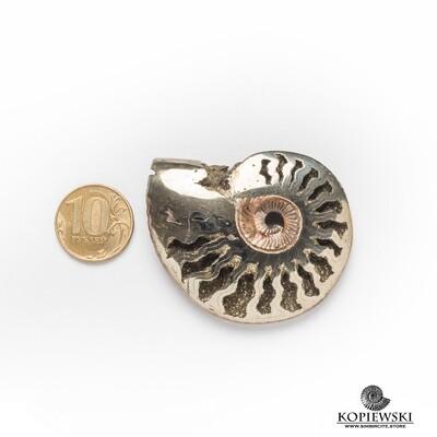 Pyrite (pyritized) Ammonite