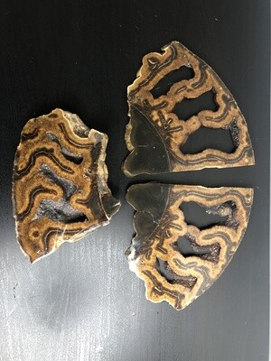 Lot Ammonite slices
