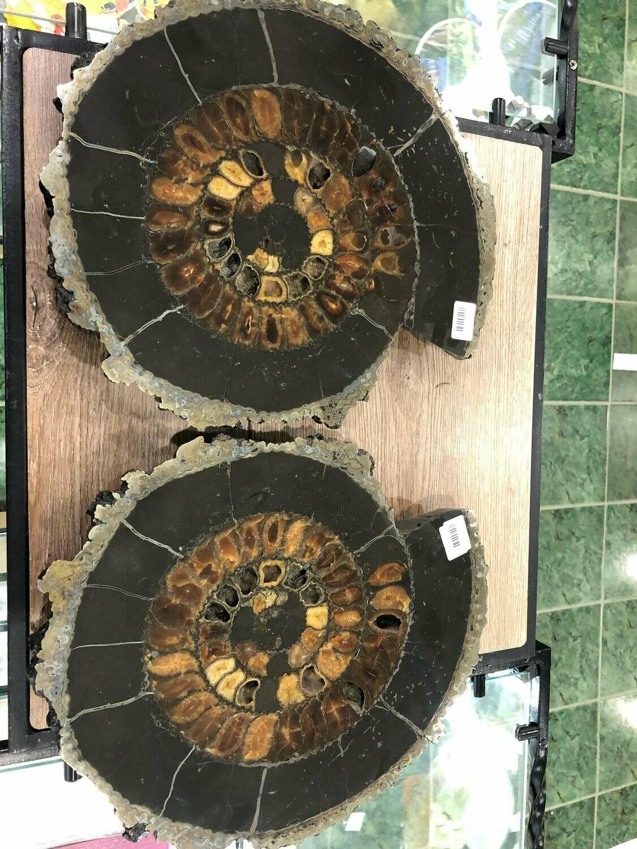 Pair Ammonite Slice Ø 36 CM - 1100 $