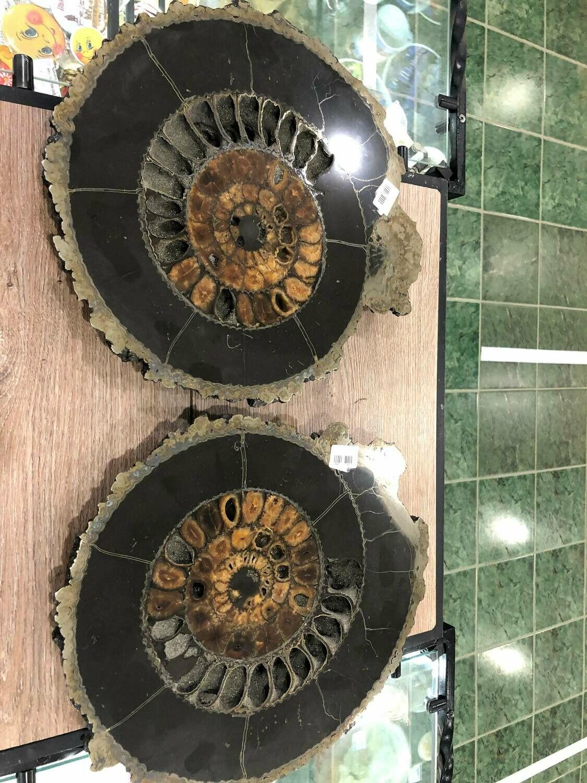 Pair Ammonite Slice Ø 35 CM - 1100 $