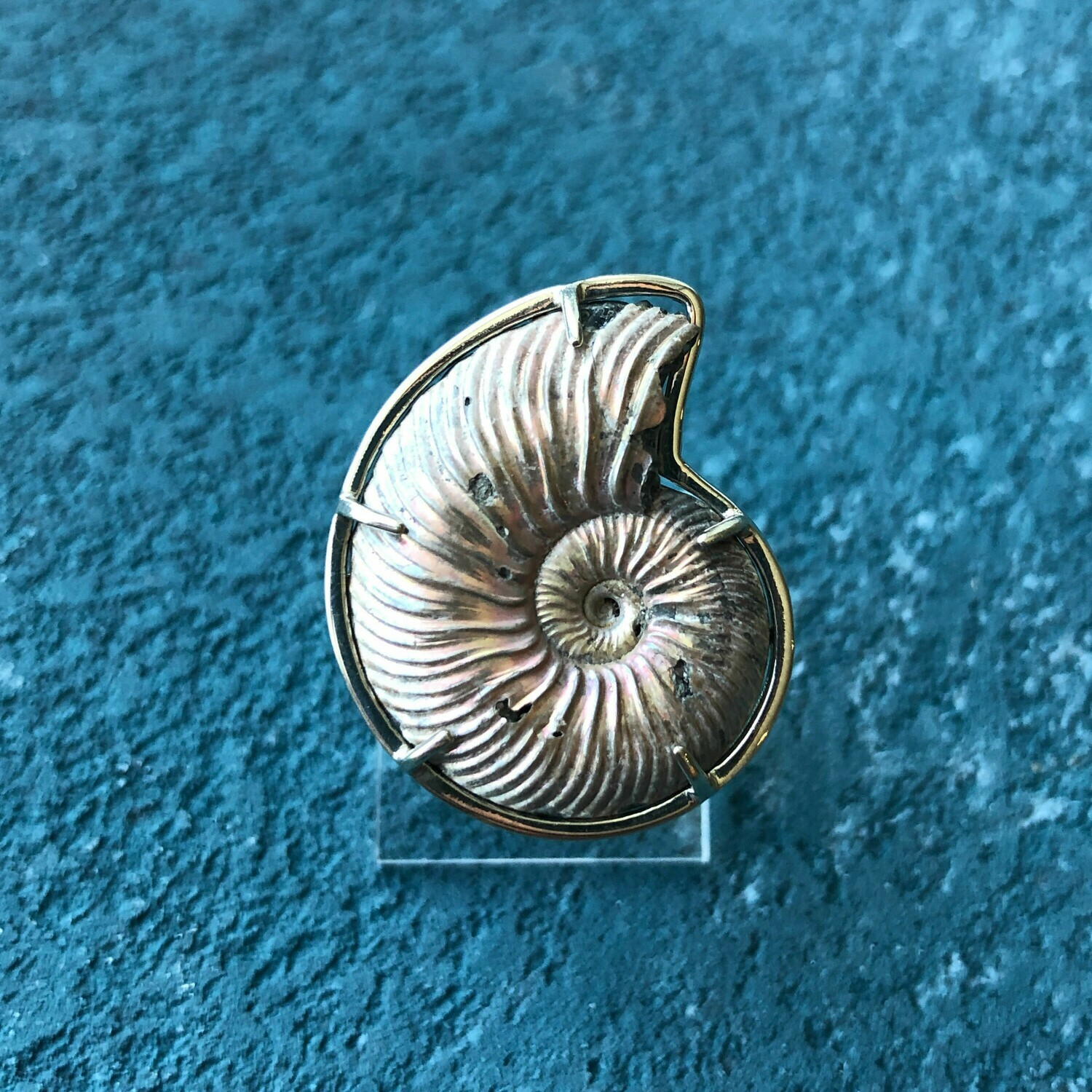 Ring witn Ammonite (Dimensionless)