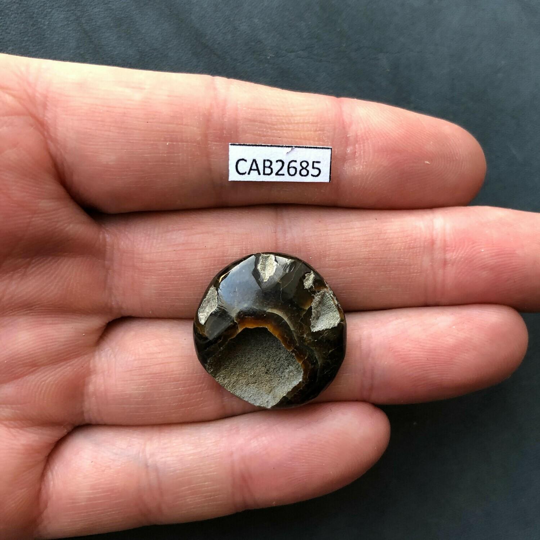 Ammonite Geode (Ammonite Cabochon)