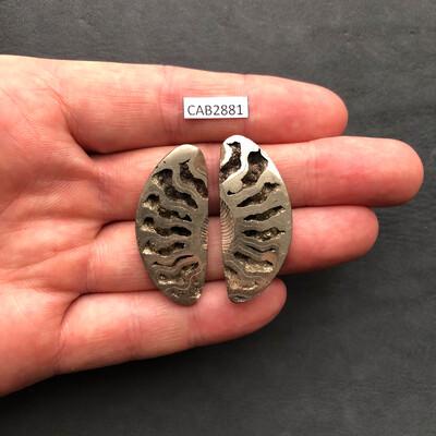 Ammonite Geodes (Pair)