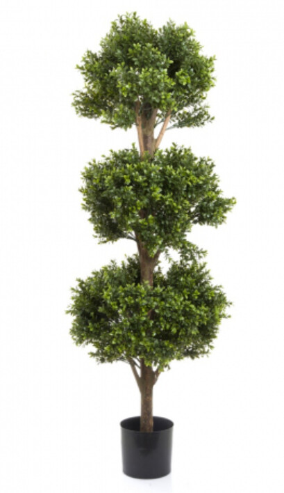 BOXWOOD TRIPLE BALL TREE