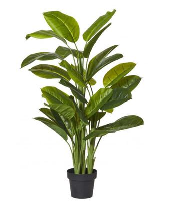 EVERGREEN PLANT-GARDEN POT