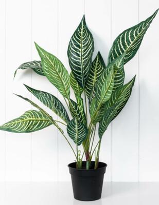ARTIFICIAL PLANT - CALATHEA 49CM