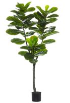 FIDDLE TREE 150CM