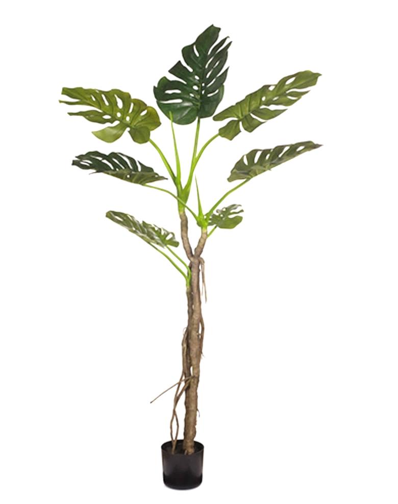 MONSTERA LEAF TREE 168CM