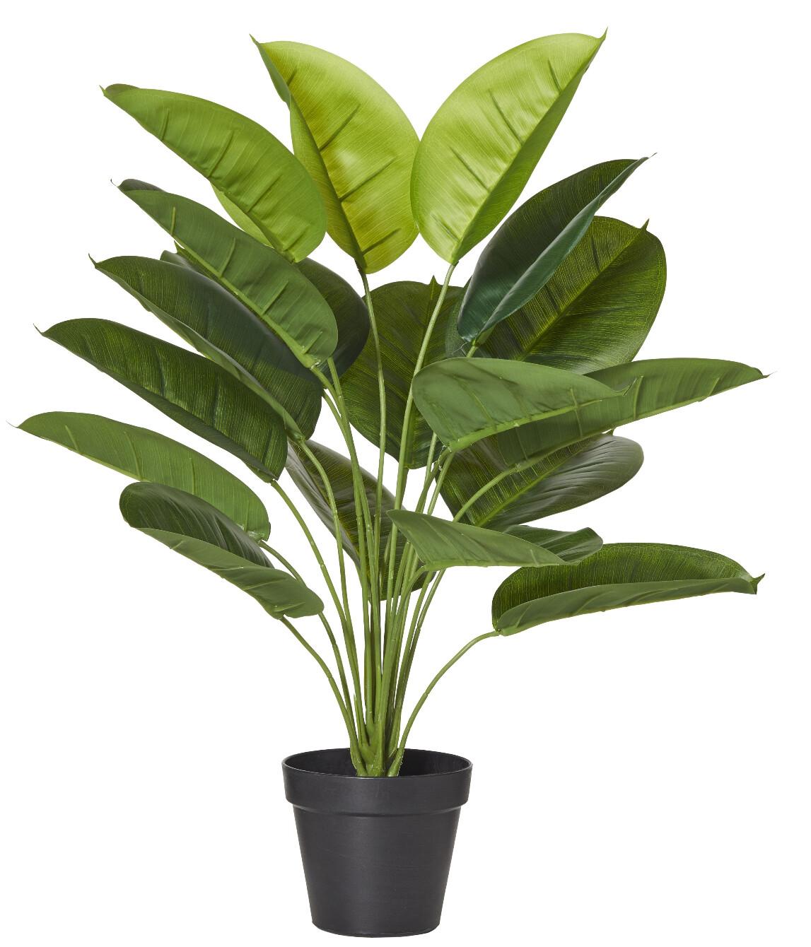 SMALL EVERGREEN PLANT GARDEN POT