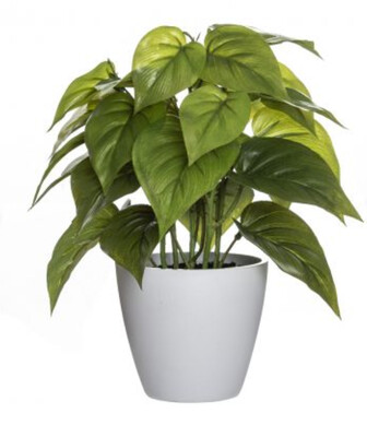POTTED PLANT IN POT - GREEN
