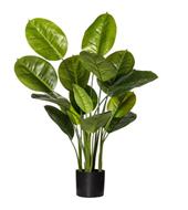 EVERGREEN PLANT GARDEN POT - NEW