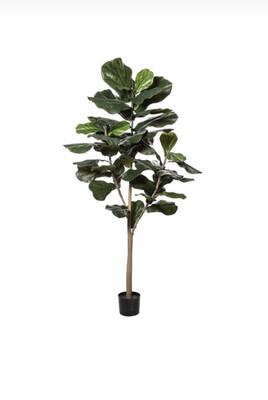 FIDDLE TREE LARGE LEAF 180CM