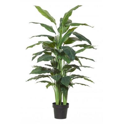 SPATHIPHYLLUM PLANT GARDEN POT