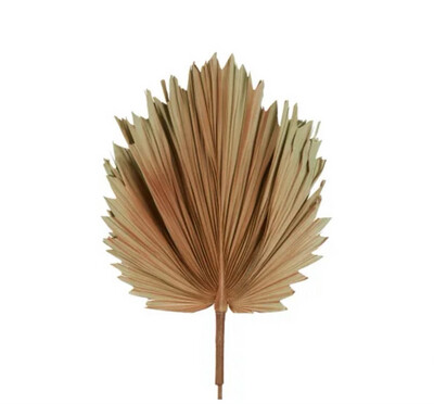 DRIED REAL PALM BROWN 89CM